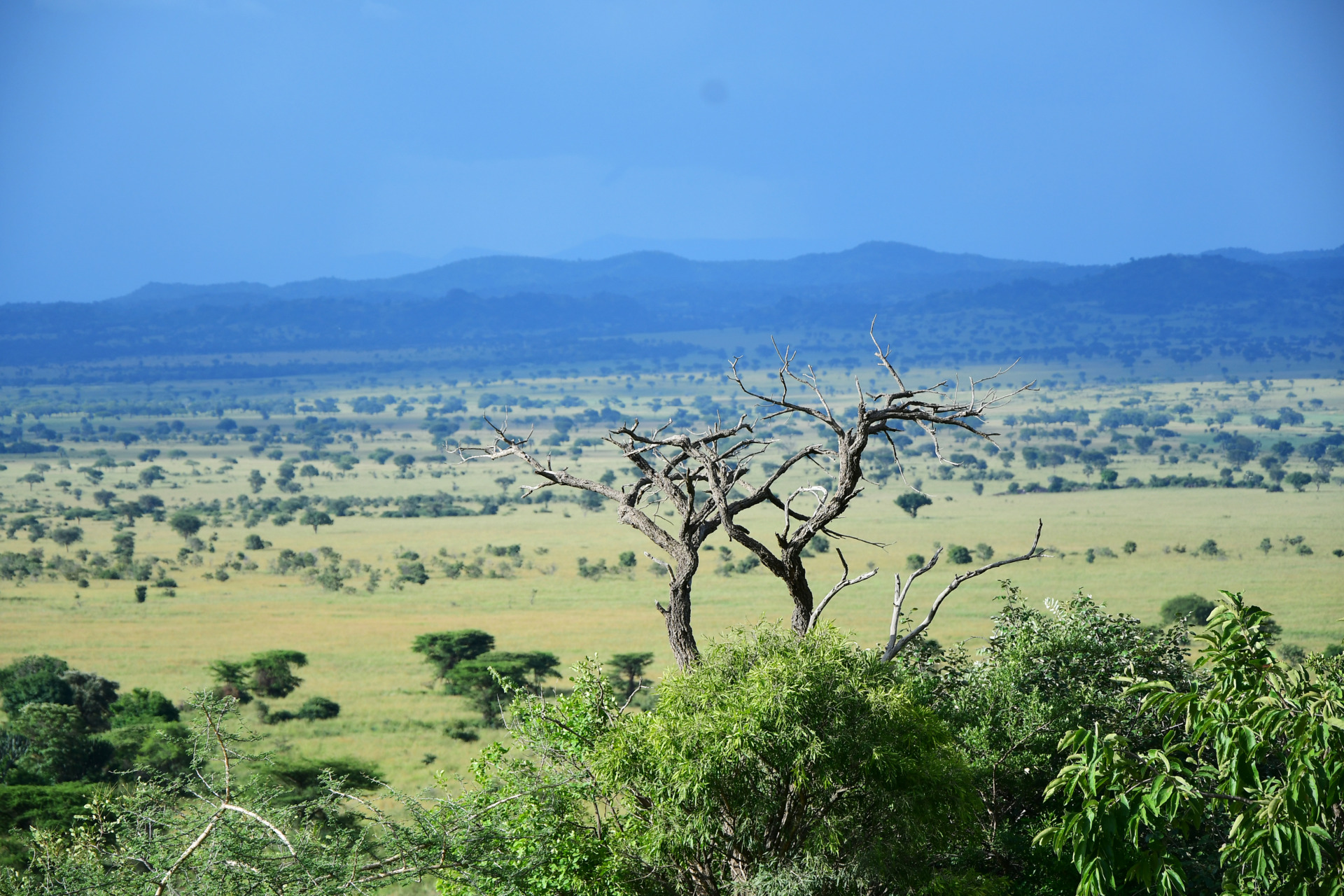 Parel van Afrika Kidepo Valley NP