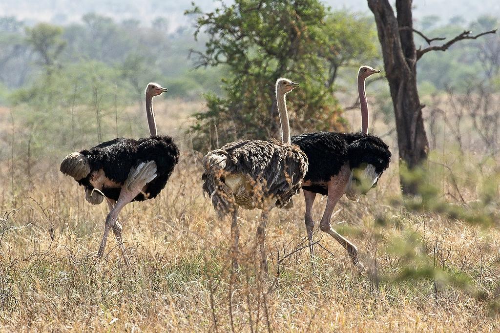 Parel van Afrika Kidepo Valley National Park