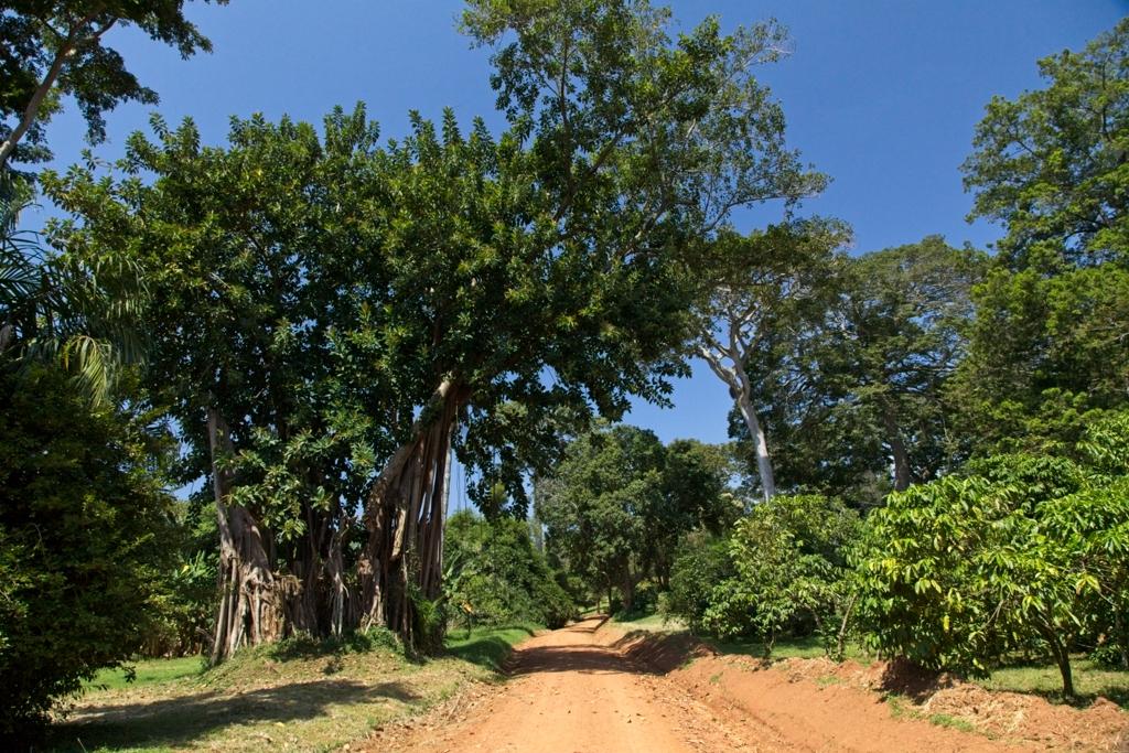 Entebbe Botanical Gardens