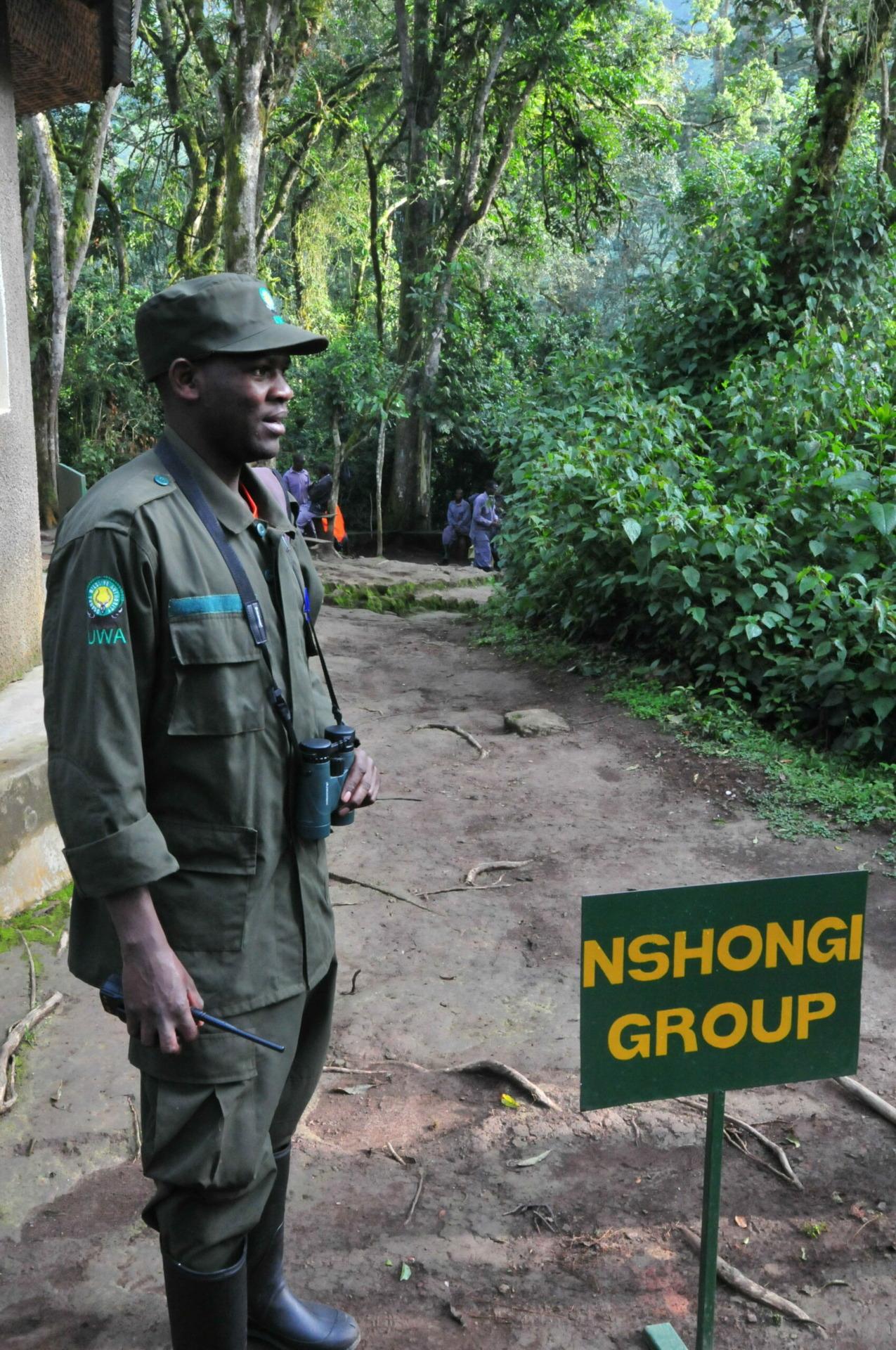 Gorilla Tracking in Oeganda