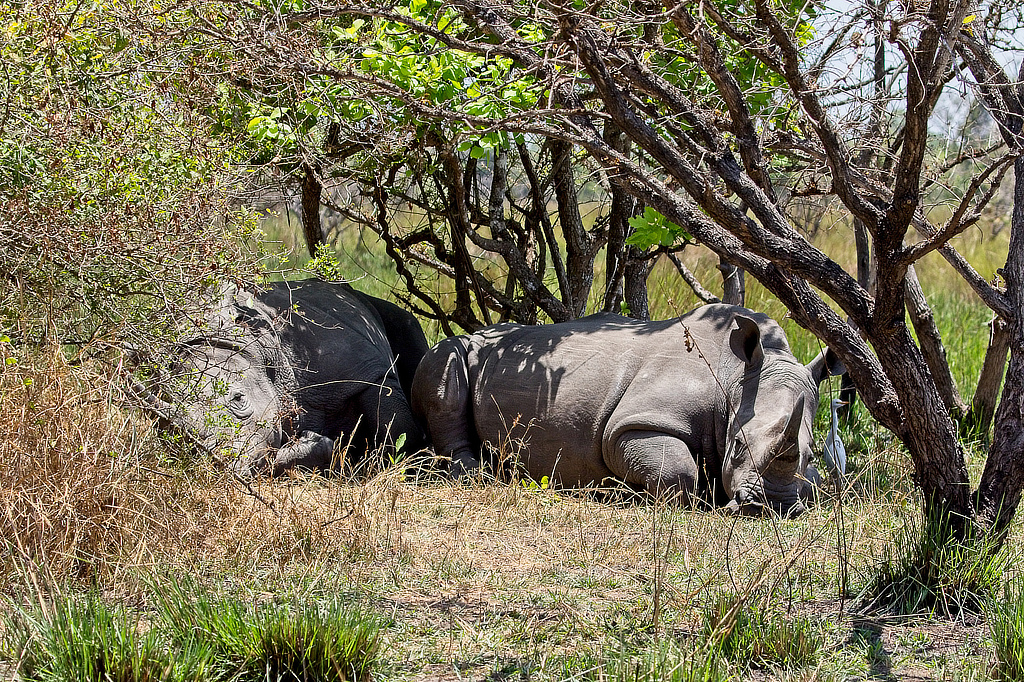 Natuurlijk Oeganda Murchison Falls