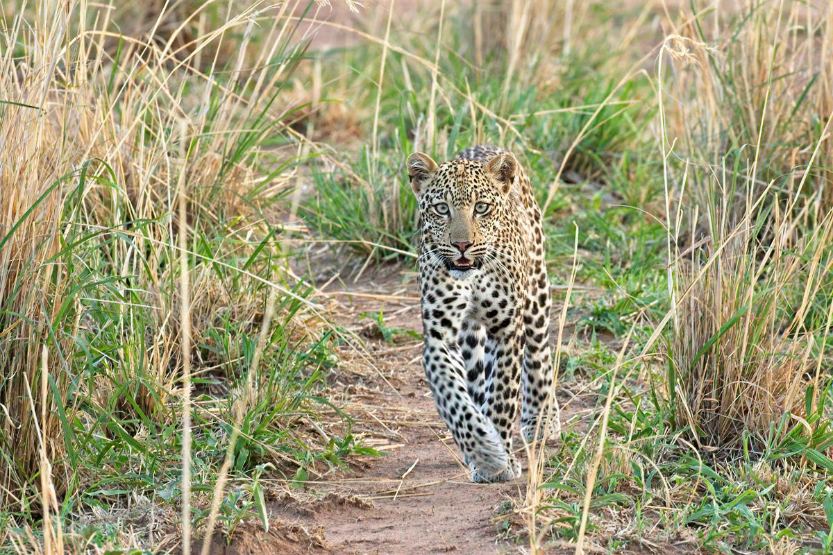 Nieuwsgierig komt ze tot op twee meter van de landcruiser - Kidepo Valley NP