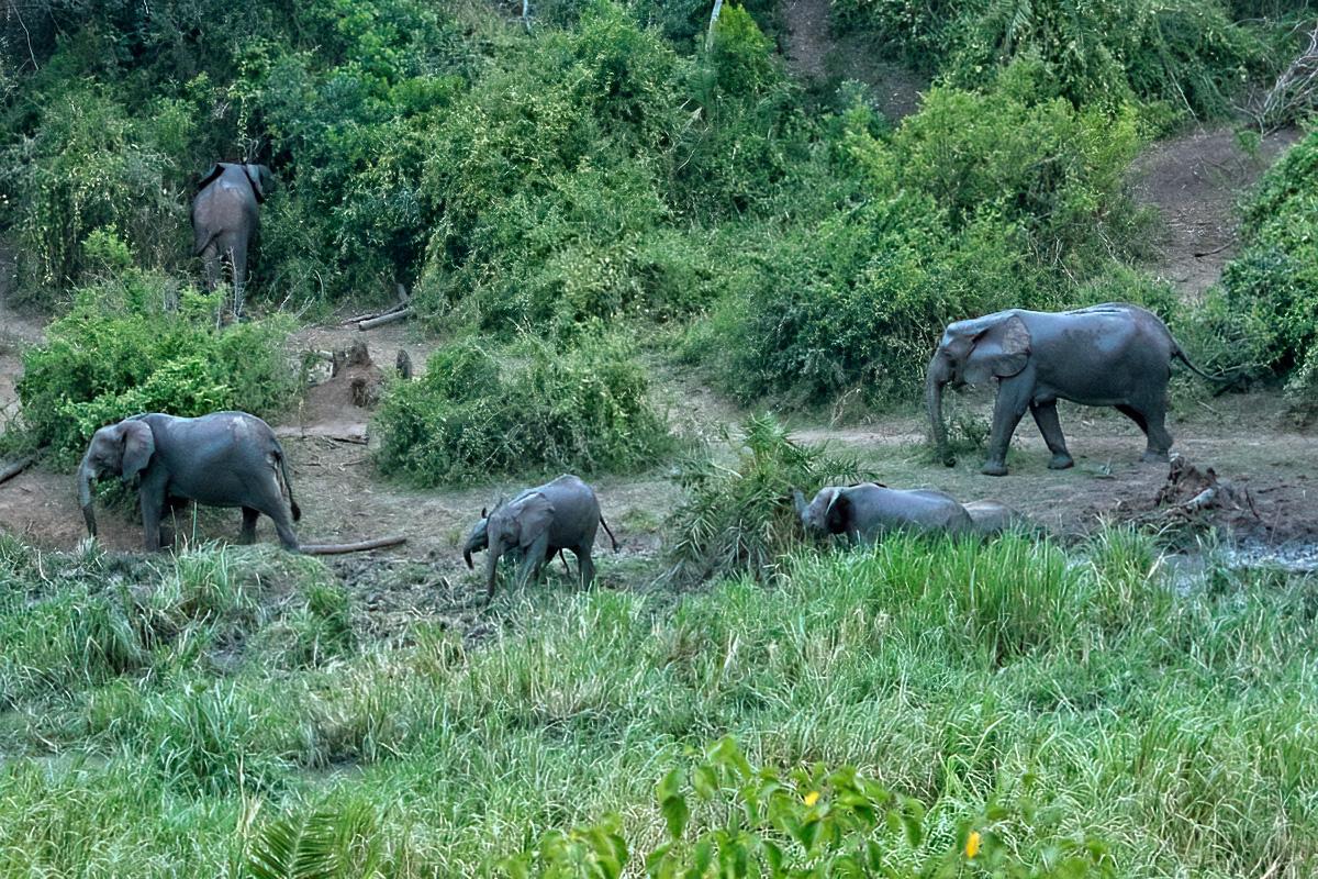 Vlakbij The Bush Lodge is een kleine inham van het Kazinga Channel. Hier zijn in de avond regelmatig savanneolifanten te zien.
